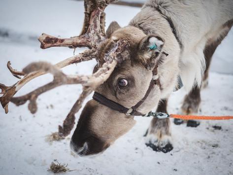 Glade jul, hellige jul! God jul in Norwegen!