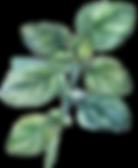 AdobeStock_118700341-web.png