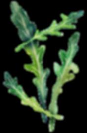 Kräuter und Gemüse in unserer frischen, vitamminreichen Cotidiano-Küch