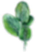 AdobeStock_64281108-web II.png