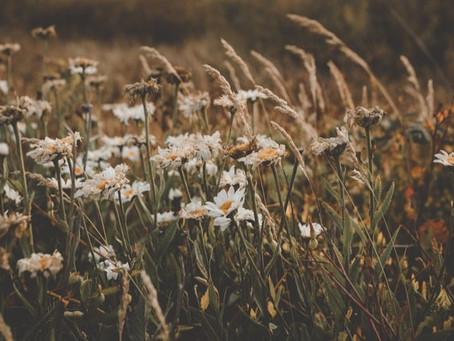 Ein Gänseblümchen, der Frühling und der Vater aller Cocktails - der Brandy Daisy