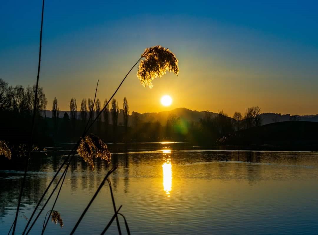 Bettenauerweiher Sonne