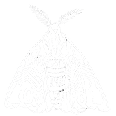 Trans Moth.png