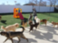 Dog Day Care at No Leash Needed St. Louis