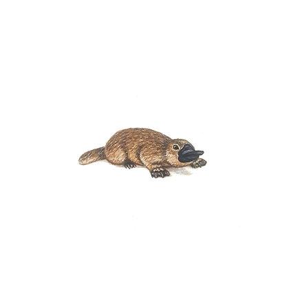 Platypus.  Original Miniature Painting.