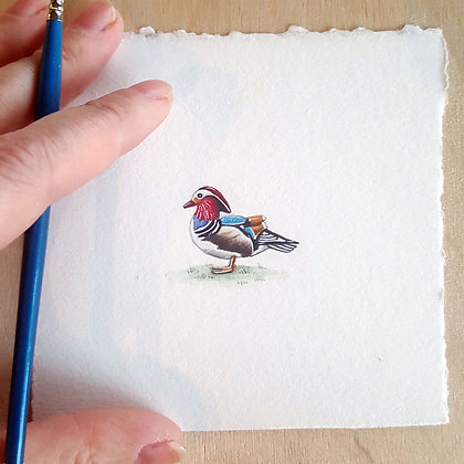 Wood Duck.  Original Miniature Painting.