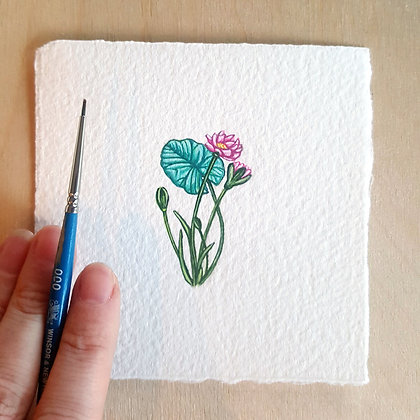 Water Lily.  Original Miniature Painting.