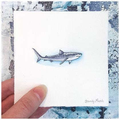 Great White Shark.  Original Miniature Painting.