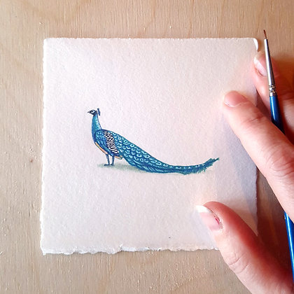 Peacock.  Original Miniature Painting.