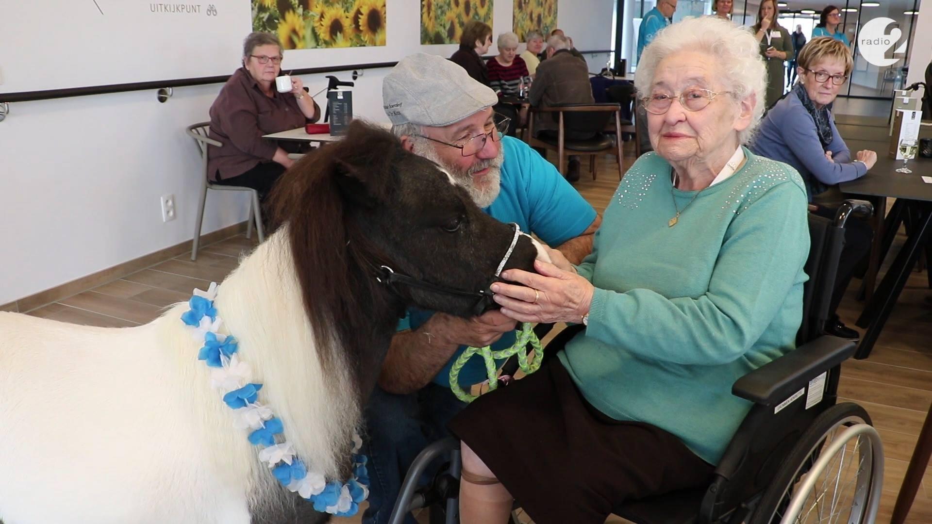 Therapiepaardjes bezoeken woonzorgcentrum