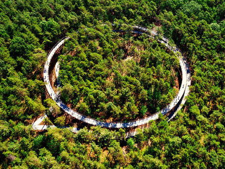 360° pathway to cycle through the trees in belgium