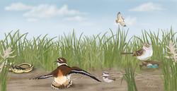 Ground-Nester-Diorama