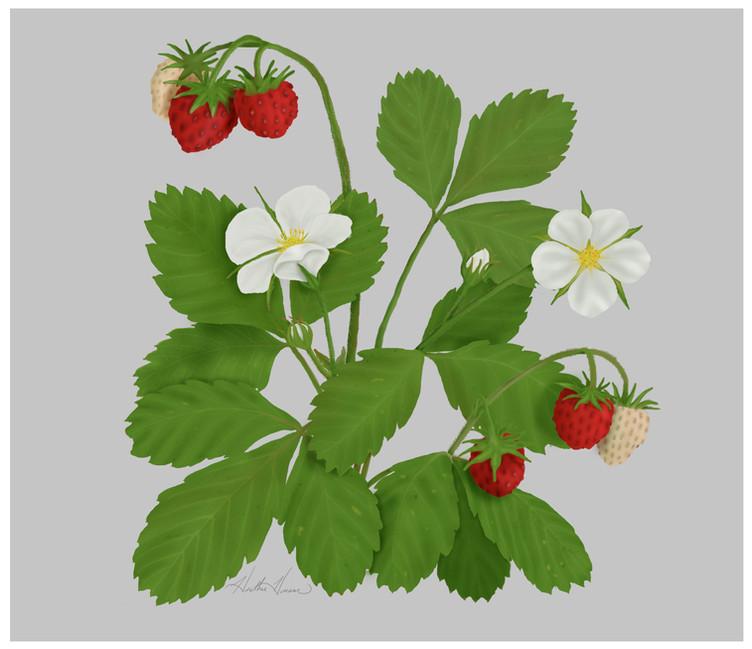 Wild Strawberry.jpg