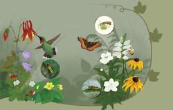 Woodland Pollinators No text