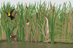Marsh-Diorama