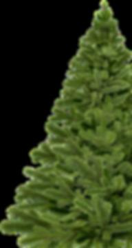 nordmann-fir.png