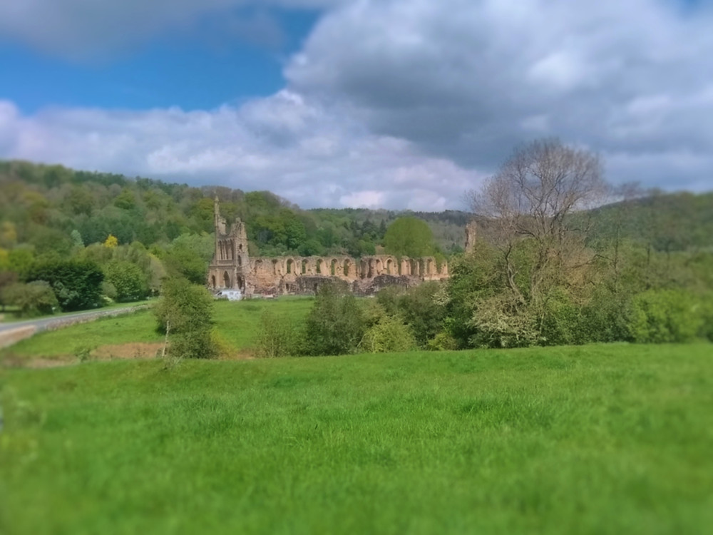 The ruin of Byland Abbey
