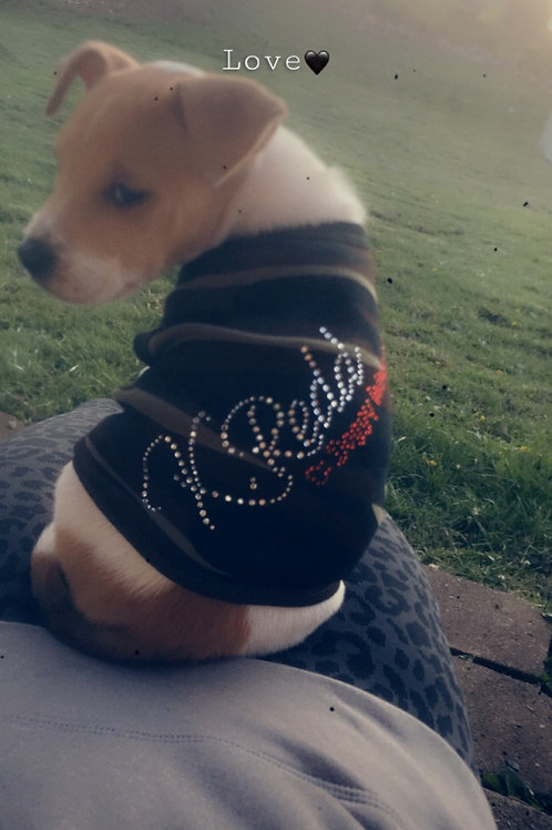 Blinged Out Doggy T-shirt