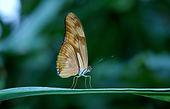 butterfly-23063_1920.jpg