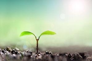 芽が出る,成長,発見