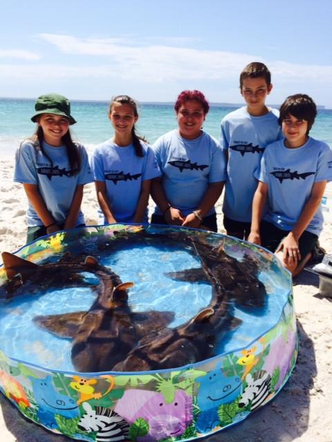 Project Shark 2015 @ Jervis Bay
