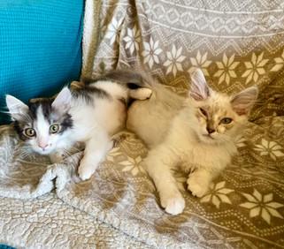 Anna & Kristof  Available for Adoption Soon!
