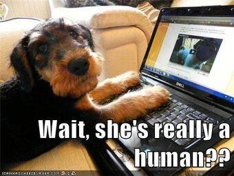 Humanhoax.jpg