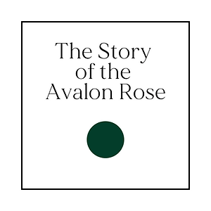 The Story of the Avalon Rose by Yellow Petal Photo