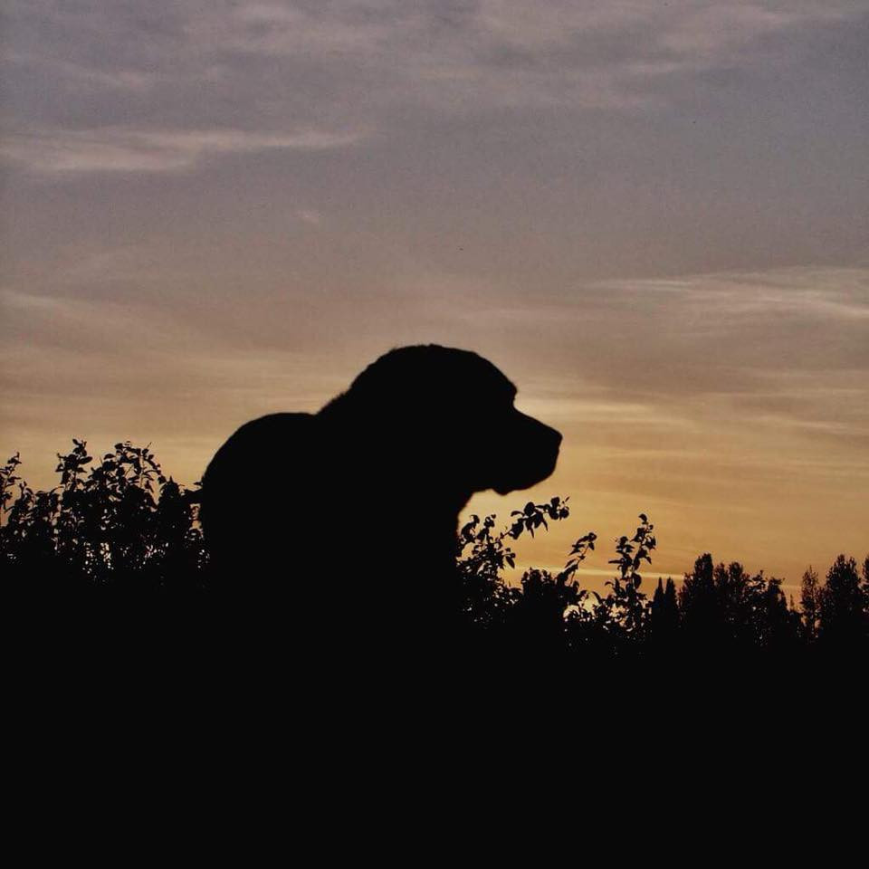 Cadbury enjoying the sunset