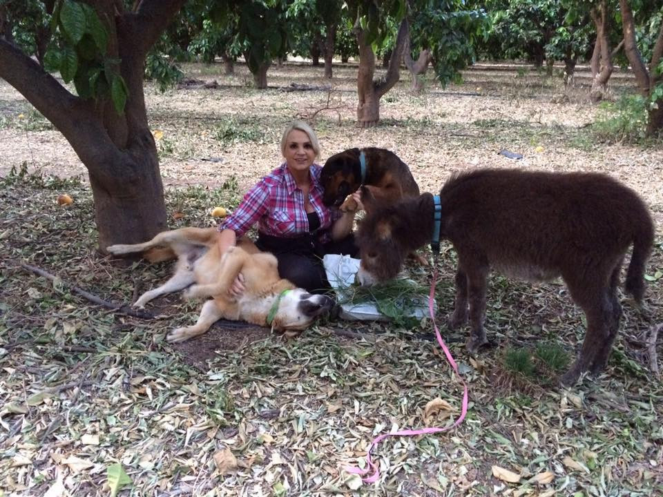 Lucy took Cadbury, Alby and orphan donkey Fresco for a walk