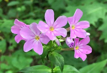z-IMG_2108 purple flowers good.jpg