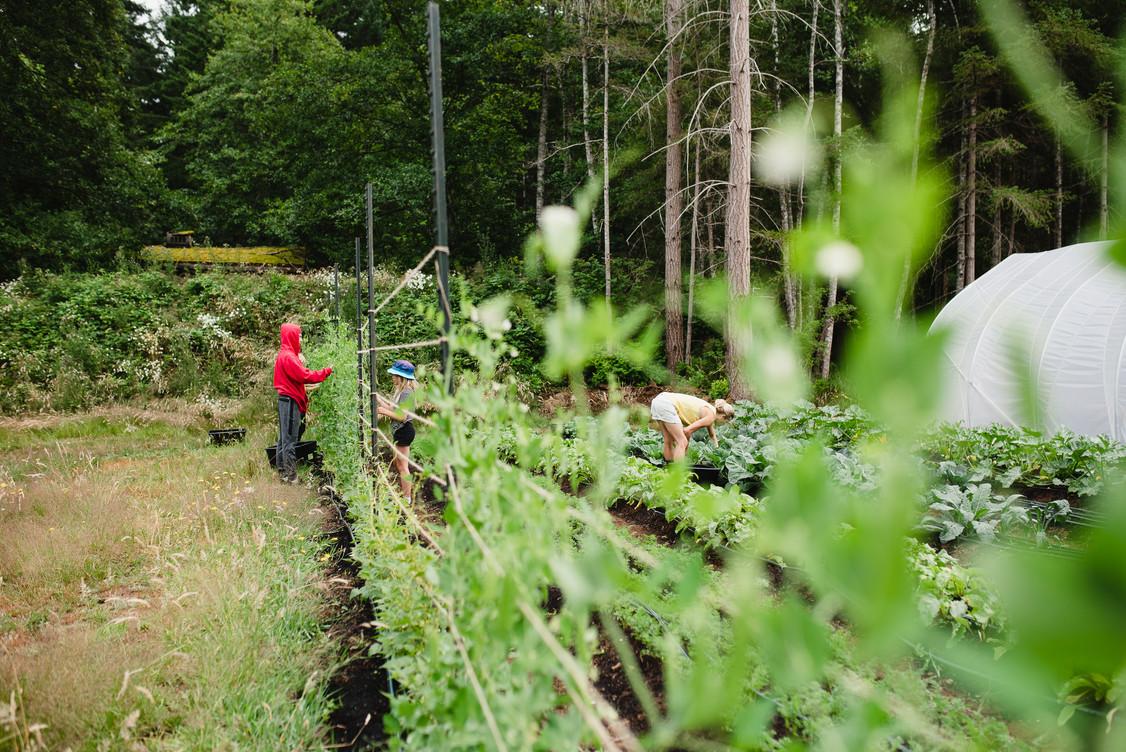 harvest long view.jpg