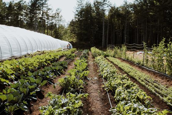 farm long view.jpg