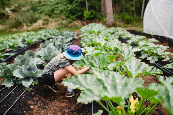 zucchini harvest.jpg