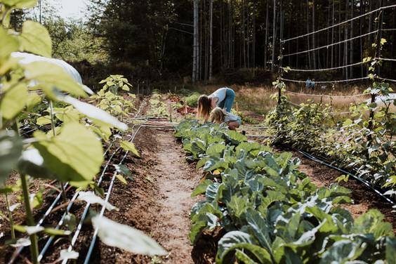 girls harvesting.jpg