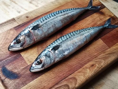 Mackerel 1kg (Individually Frozen)