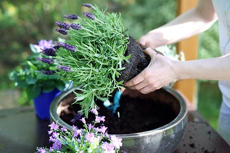 Lavender_Pot.jpg