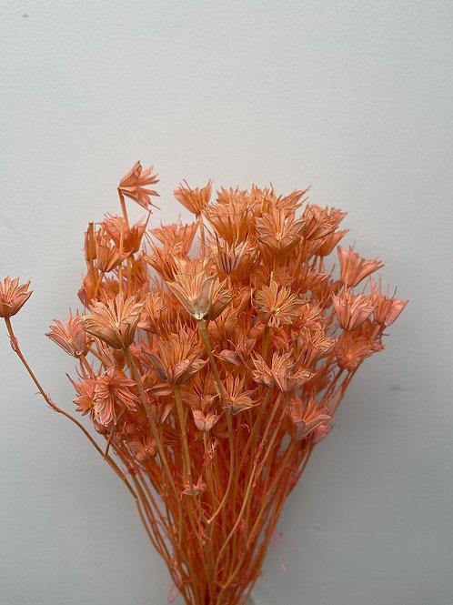 Nigella Light Pink (1 bunch)