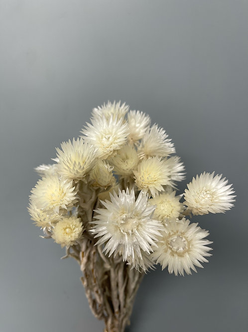 Helicrysum Capblum, White (1 bunch)