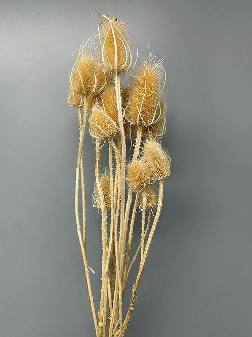 Cordus Natural (1 bunch)