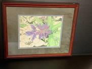 Bromeliad Blue Rain