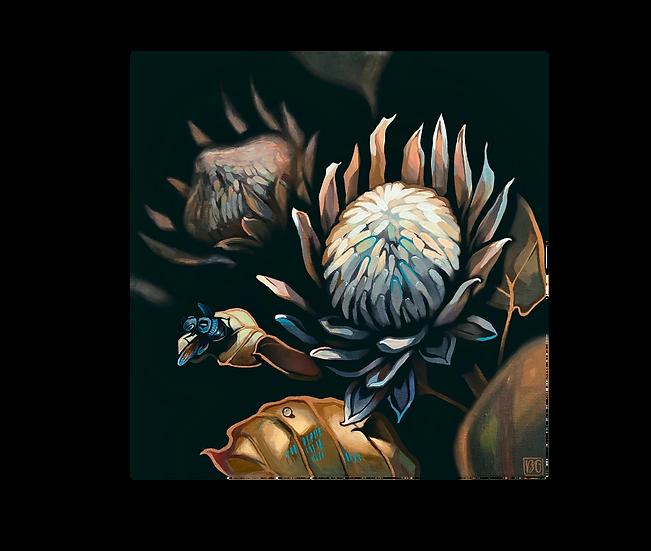 Dried Protea 12x12 Original