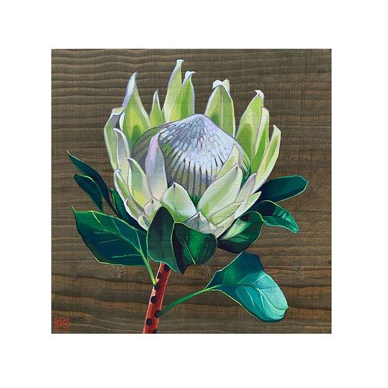 Protea 12 x 12 (PRINT)