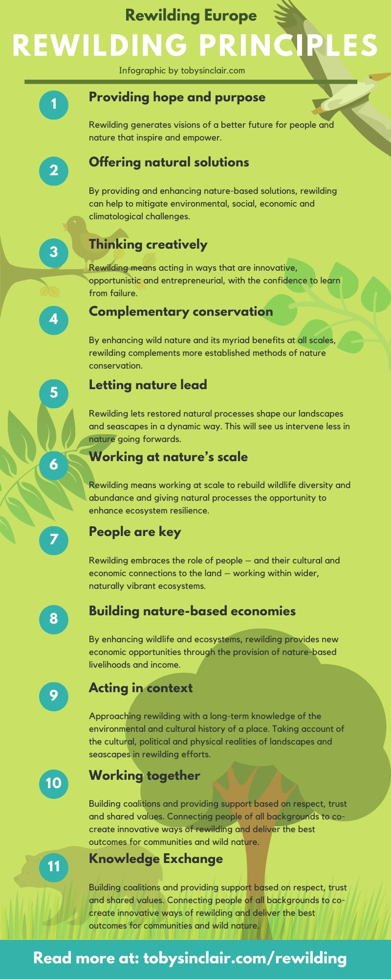 Rewilding Principles Infographic - Rewilding Europe