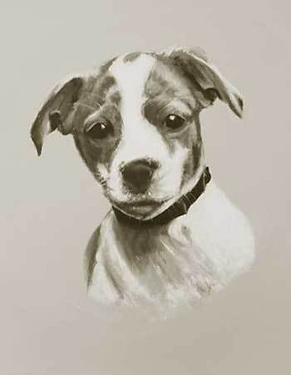 JACK RUSSELL PUP