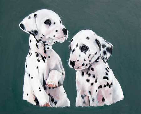 DALMATION PUPS