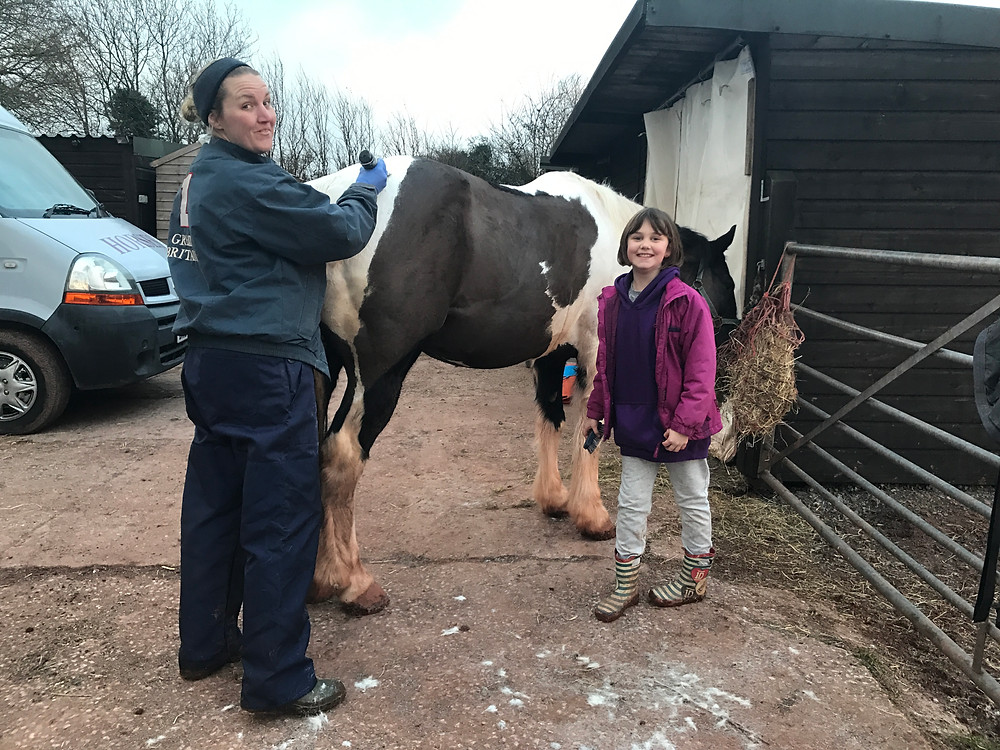horse well behaved clipping