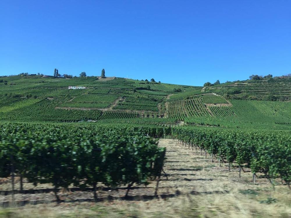 Alsacian vineyards in France, captured back when travel was taken for granted. Copyright P. Delophont.