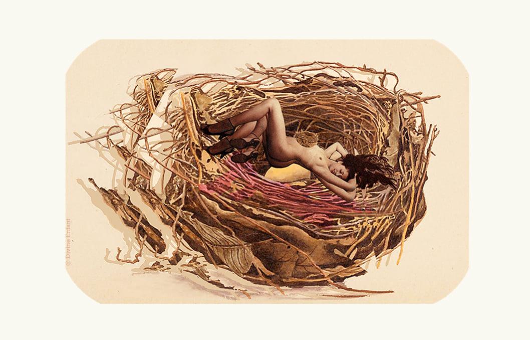 """"""" Histoire de nid """""""
