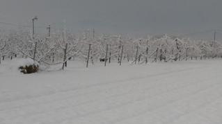 小布施も雪景色